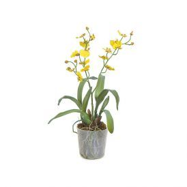 16in. Dancing Orchid - Yellow|Indoor - NFR