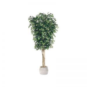 10' Ficus Tree - Green|Indoor