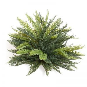17in. Mini Boston Fern, Outdoor Rated