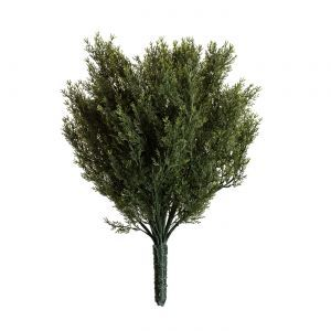 24in. Cypress Bush, Indoor