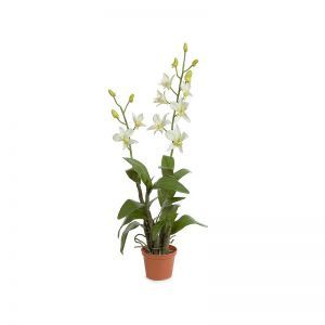 "25"" Dendrobium Orchid - Cream 