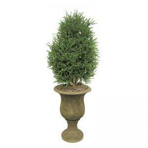 3' Lycopodium Shrub Topiary - Indoor