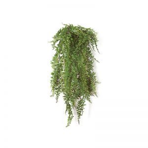 30in. Buckler Fern - Green|Indoor - NFR