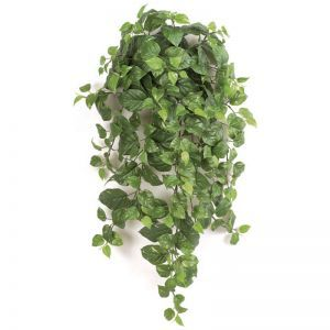 3' Pothos Bush - Green|Indoor - NFR