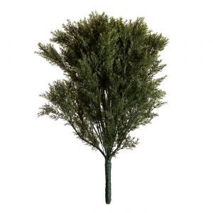36in. Cypress Bush, Outdoor