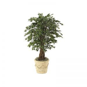4.5' Mini Ficus Tree - Green|Indoor