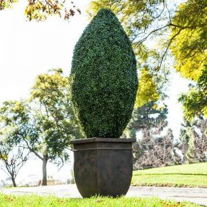 48inH Oblong Topiary, Outdoor