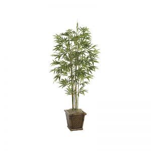 5' Japanese Bamboo Tree - Green|Indoor