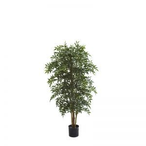 7' Potted Ruscus Nitida