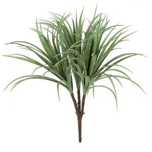 UV Protected Liriope Bush