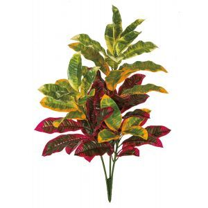 Colorful Outdoor Rated Croton Bush