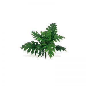 Acanthus Plant 30in.