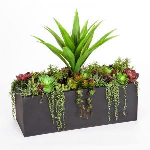 Agave and Succulent Space Divider with Black Planter 39.5inLx14inWx38inH