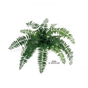 28in. Boston Fern