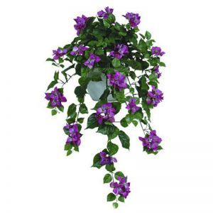36in. Bougainvillea Bush