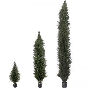 4', 6', or 8' Duraleaf Cypress/Arborvitae, Outdoor