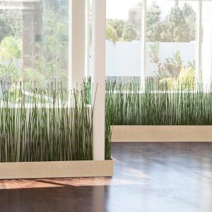 Horsetail Reed by the Square Foot, Indoor