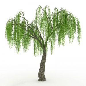 Inherently Fire Retardant Rated Willow Tree