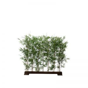 4'H or 6'H Oriental Bamboo Hedge