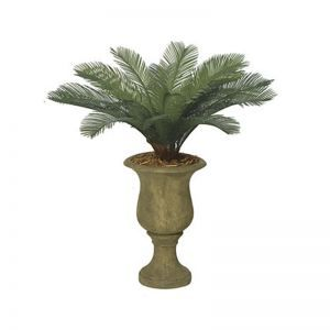 3' Petite Sago Palm Cluster, Outdoor Rated