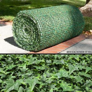 Ivy Rolls, Outdoor
