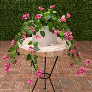3' Pink Fire Retardant Bougainvillea Bush