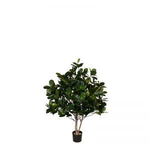 4' or 6' Potted Banyan Tree