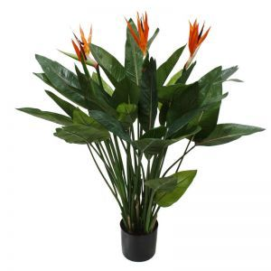 4' Potted Bird Of Paradise Plant