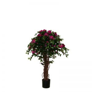 4' or 5' Potted Bougainvillea Tree - Purple