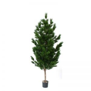 5' or 7' Potted Pinus Tree