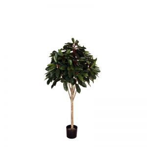 5' Potted Red Schefflera Tree