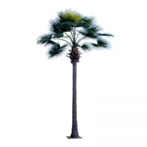 22' Royal Fan Palm