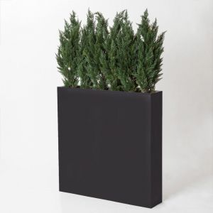 6' Slender Cedar Screen in Rectangle Planter