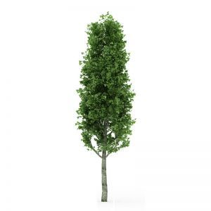 UV Rated Poplar Tree