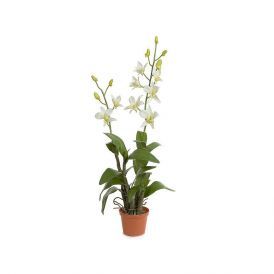 "25"" Dendrobium Orchid - Cream, Indoor"