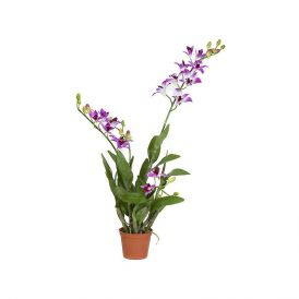 35in. Dendrobium In Pot - Purple/White, Indoor