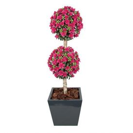5' Outdoor Artificial Azalea Double Ball Topiary - Pink Beauty