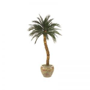10' Preserved Canary Palm Tree w/ 36 Fronds
