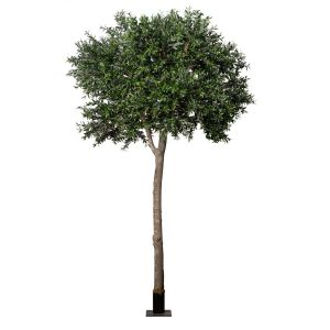 Inherently Fire Retardant Rated Black Olive Tree