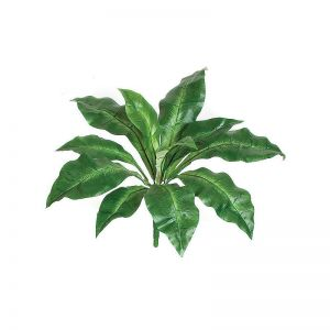 18in. Birds Nest Fern - Green|Indoor