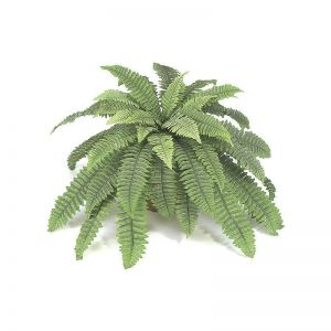 21in. Boston Fern Cluster - Green|Indoor