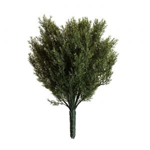 24in. Cypress Bush, Outdoor