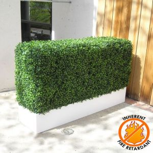Boxwood Hedges in Modern Planter, Fire Retardant