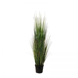 3', 4' or 5' Mountain Grass