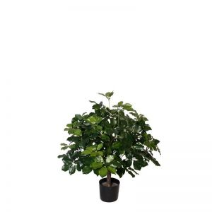 3' Potted Brazilian Schefflera Tree
