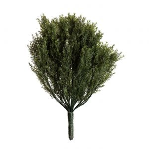 30in. Cypress Bush, Indoor