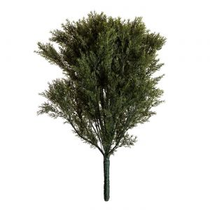 36in. Cypress Bush, Indoor
