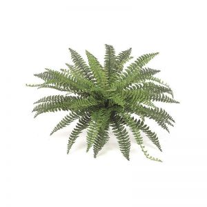 39in.  Fishtail Fern - Green|Indoor