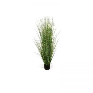 4' or 6' Zebra Onion Grass