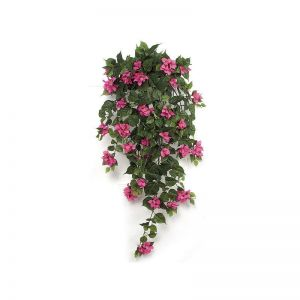 42in. Bougainvillea Bush - Fuchsia, Indoor